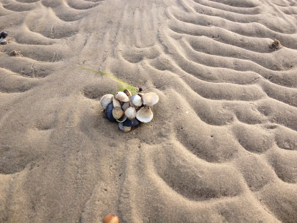 Muscheln beim Nuscheln