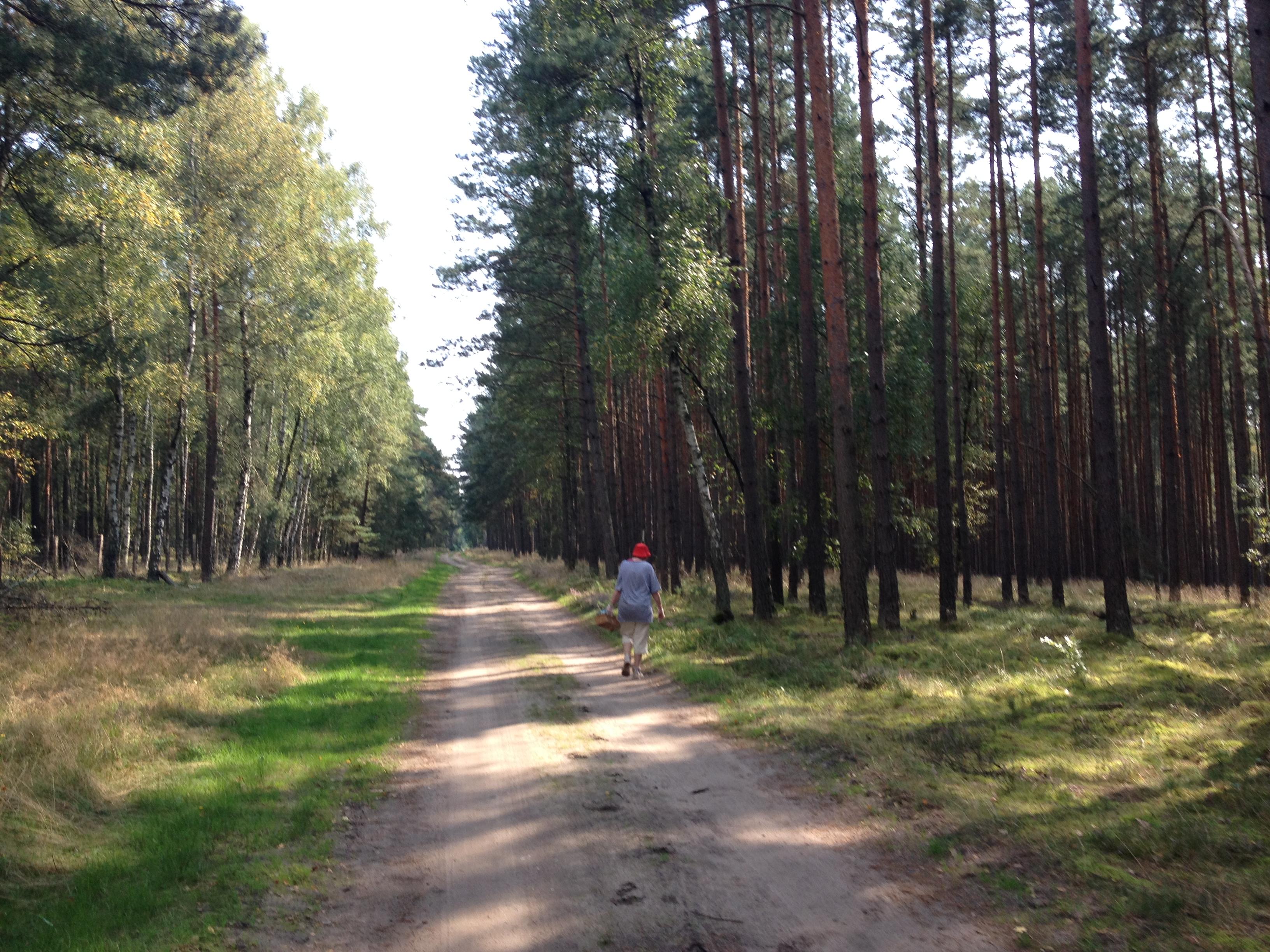 Pilzsammlerin im tiefen Brandenburger Wald
