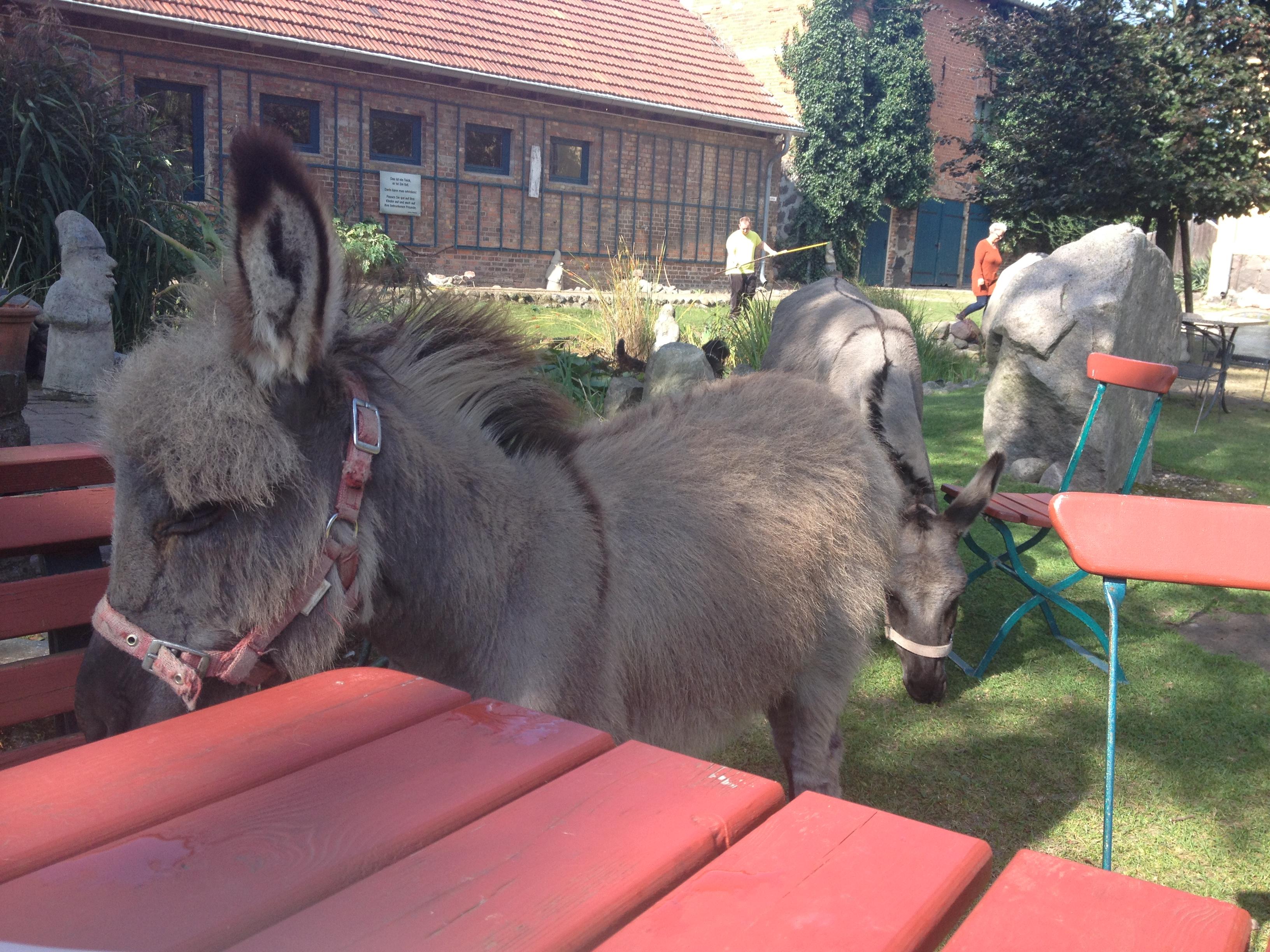 Die Esel sind auch Künstler im Museumshof