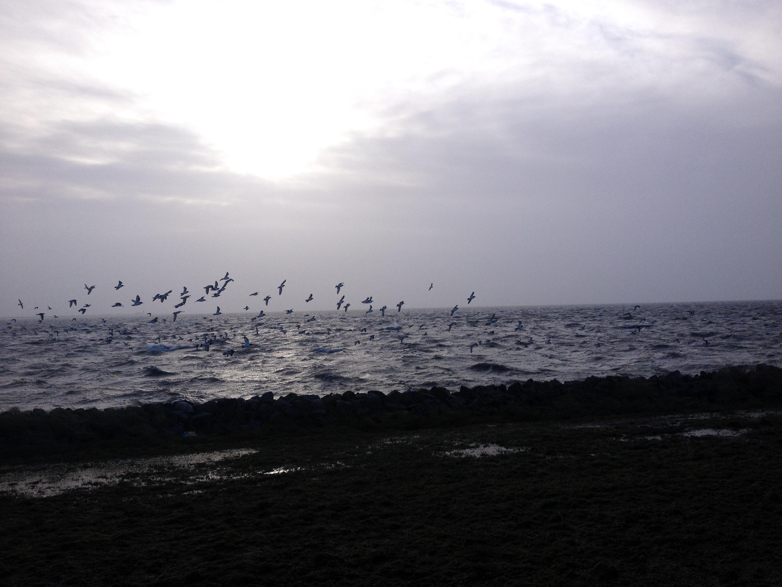 Sonne und Meer und Weite - ich komme wieder!