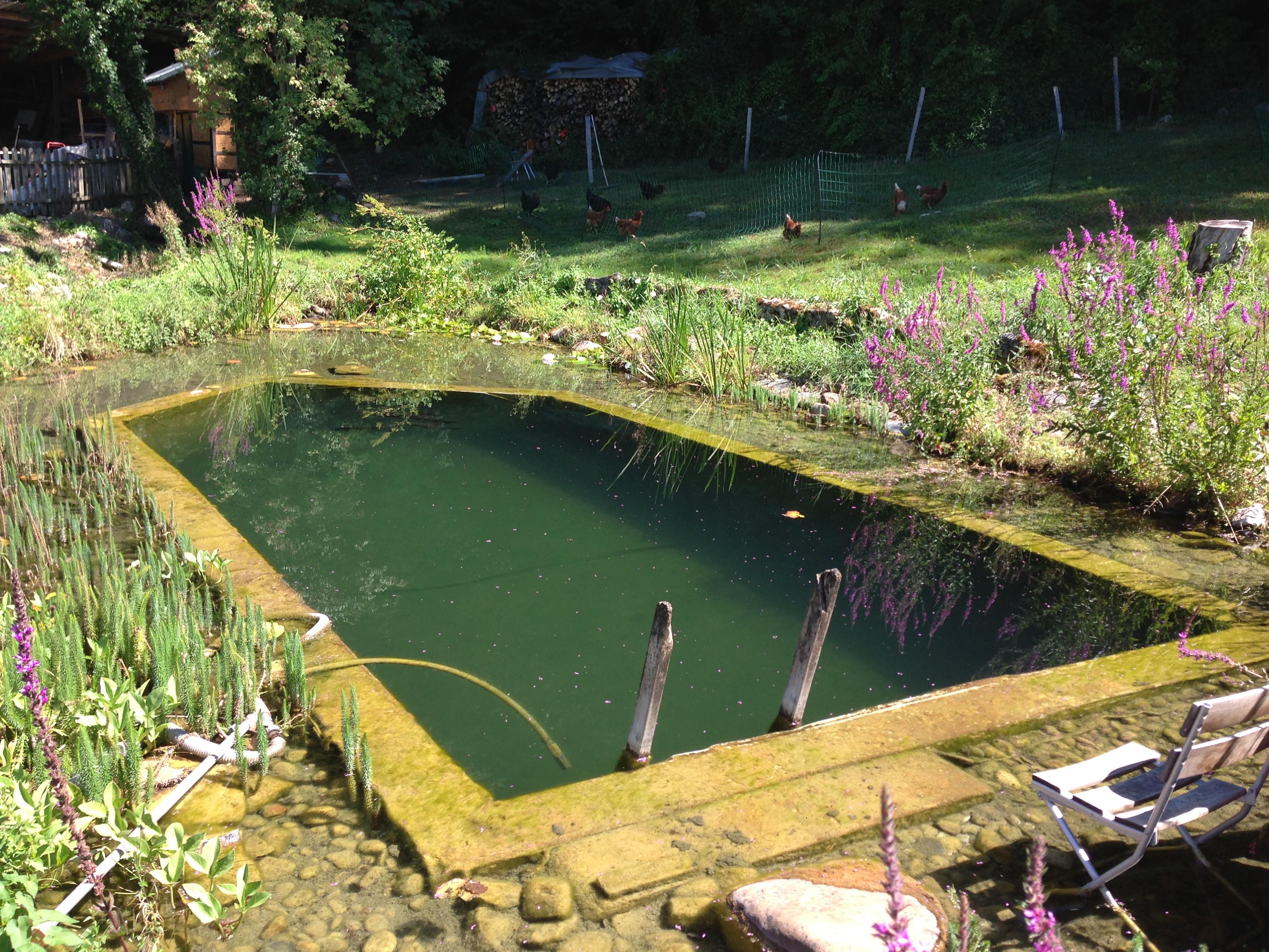 Ein Naturbecken, gespeist von einer Quelle