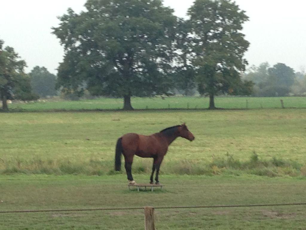 Ich glaube da steht ein Pferd